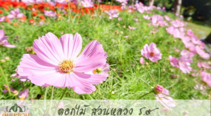 ชมดอกไม้ สวนหลวง ร.9